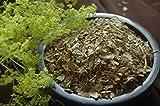 hierba de pie de león (Alchemilla) 1 Kg