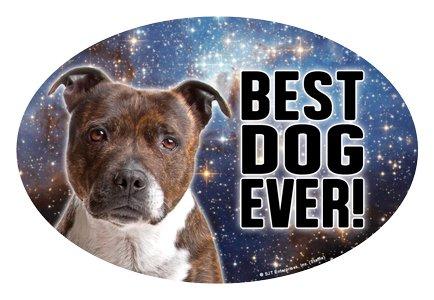 Brindle Staffordshire Bull Terrier cane-regalo (Best Ever.) 10,2x 15,2cm Flessibile ovale magnete. Impermeabile e resistente ai raggi UV.
