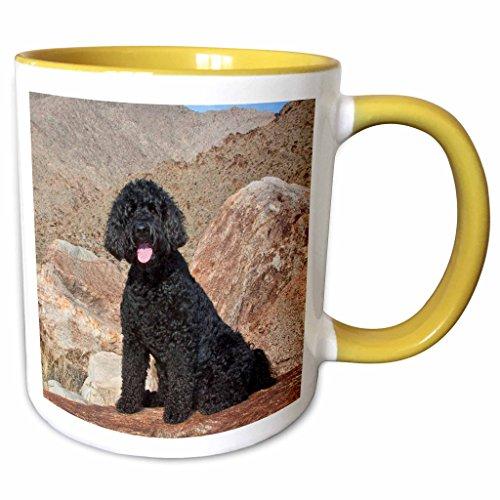 3dRose mug_192364_8 USA, California Labradoodle on a boulder in the Colorado Desert, Yellow Becher