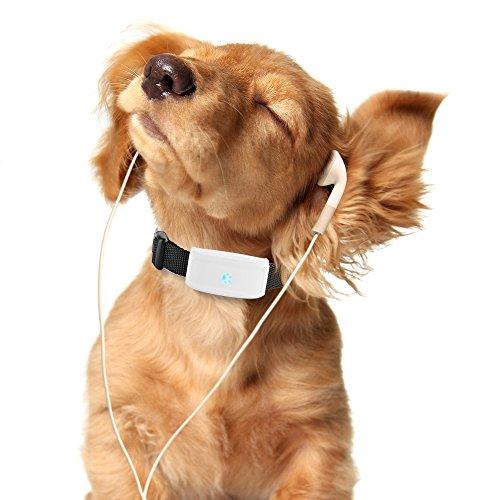 Hangang Mini localizador GPS, GPS perro, localizador GPS perro gato animal real...