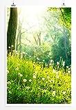 Eau Zone Bilder - Naturbilder – Frühlingswiese mit Pusteblumen- Leinwand Kunstdrucke Wandbilder aus Deutschland