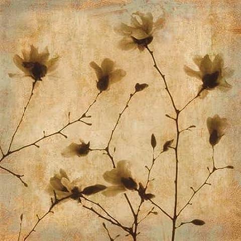 Impresión de Arte Fino en lienzo : Magnolias II by Kelly, Caroline - Medio (96 x 96 Cms)