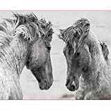 Wooden Adult Jigsaw 1000 Piece Horse Mirror Image In The Mirror Very Challenging Adult And Teen Casual Jigsaw Puzzle,High Quality Large Size Puzzle