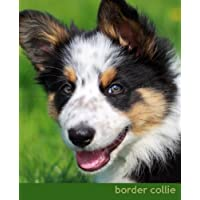 Border Collie: A Gift Journal for People Who Love Dogs: Border Collie Puppy Edition: Volume 3 - Border Collie Lovers
