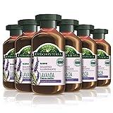 Antica Erboristeria 2565396 Shampoo Illuminante Lavanda e Erbe della Provenza, Shampoo per Capelli Normali con Ingredienti Naturali, 6 X 250 Ml
