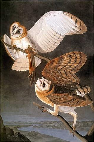 Holzbild 40 x 60 cm: Audubon: Owl. von John James Audubon / Granger Collection