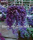 SwansGreen 7: Multi Color Seed Perennial Kräuter Blatt Pflanzen Creeping Rasensämling Seed Interessante Bonsai Blumentopf Hausgarten-Dekor 100 P 7