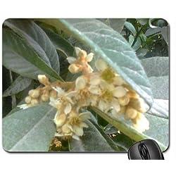 Loquat Blossoms Mouse Pad, Mousepad