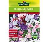 Dehner Blumen-Saatgut, Riesen-Edelwicke