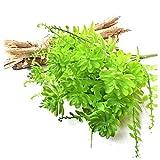 CGS2 Pearl herbe lotus - arbuste - plastique fougère artificielle plante verte |plante fausse fleur - idéal for la table décoration balcon bureau de jardin intérieur de la maison et à l'extérieur
