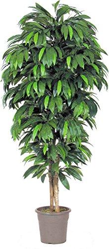 Mango - Albero Artificiale Da Arredo Interno con Tronco Vero - Alto 175 cm