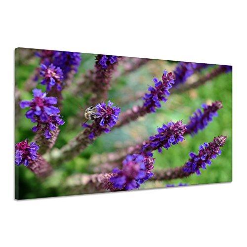 Salbei Blüte Garten Heilkraut Biene Violett Leinwand Poster Druck Bild aa1855 60x40