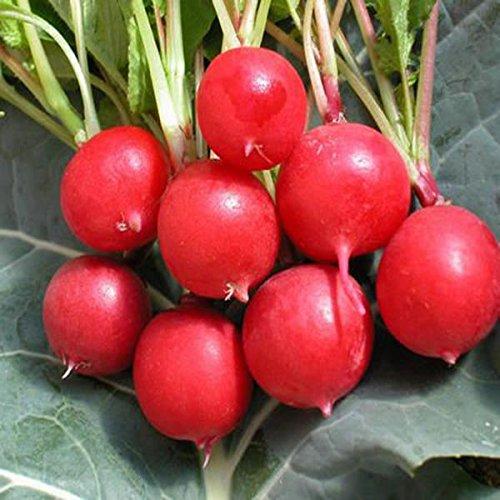KINGDUO Egrow 50Pcs/Pack Ciliegia Ravanello Semi Verde Giardino Cucina Verdure Semi Di Piante