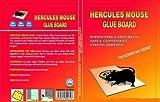 Hercules Mouse Rat,Cockroaches Chipkali ...