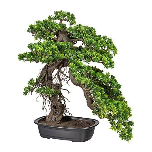 Homefinity Bonsai Podocarpus, ca 65x50cm, grün