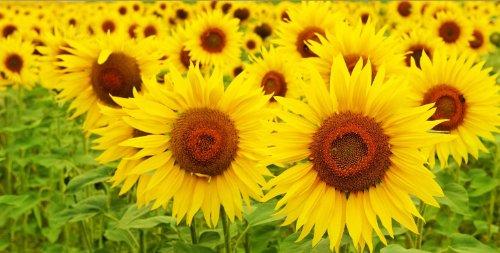 Startonight, luce nel buio Quadro su tela, C'è il sole! 40 cm x 80 cm