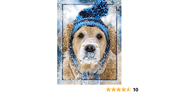"""Boxed Christmas Cards /""""Nitas New Hat Golden Retriever 5 5//8 x 7 3//8 Inches 15 Heavyweight Cards and 16 Envelopes Card"""