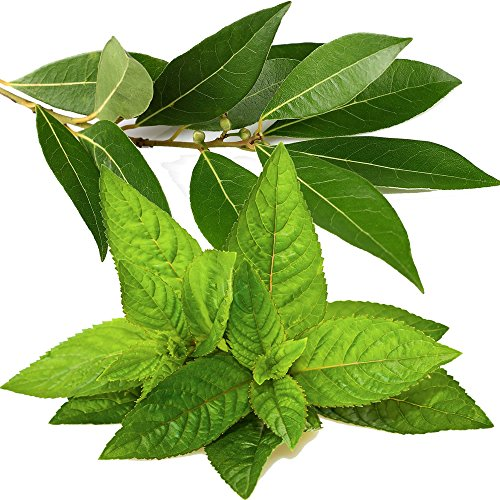 Preisvergleich Produktbild Eukalyptus & Pfefferminze Diffuser Duft Nachfüll Öl 125ml + Bonus 20x Blätter