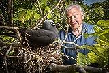 David Attenborough Great Barrier Reef [DVD]