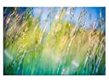 Blumenwiese Frühling Leinwandbilder auf Keilrahmen A06138 Wandbild Poster 150 x 100 cm