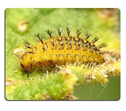 jun-xt-tapis-de-souris-bryony-larve-coccinelle-en-caoutchouc-naturel-en-matiere-dimage-23811530139