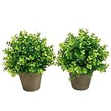 SHACOS 2 pièces Plantes Succulentes Artificielles Vertes Pot Plantes Grasses pour Home Garden Table Déco l'intérieur et l'extérieur