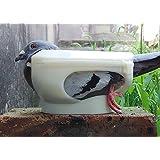 Dealglad® paloma fijo caja herramientas alimentación palomas Dado medicamentos dispositivo equipo Bird Feeder