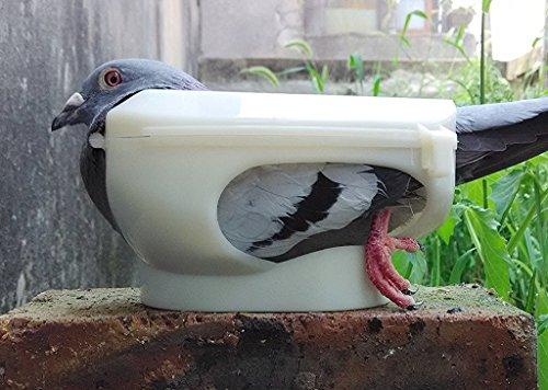 Bo te alimentation oiseaux - Fabriquer un epouvantail a oiseaux ...