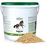 AniForte Ingwer -gemahlen- 1 kg
