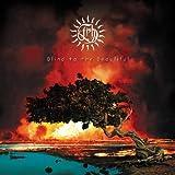 Blind to the Beautiful (Radio Edit)