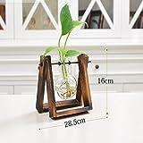 Zantec Kreative Hydroponic Glas Terrarium Tisch-Deko mit, Holz, mit Pflanze Topf zu Hause, Dekoration, 1 glass ball