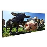 islandburner Bild Bilder auf Leinwand Eine Herde von hübschen Kühen in Bayern Wandbild Leinwandbild Poster