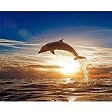 Malen nach Zahlen Kit Diy Ölgemälde Kit für Kinder und Erwachsene - Delfin 16