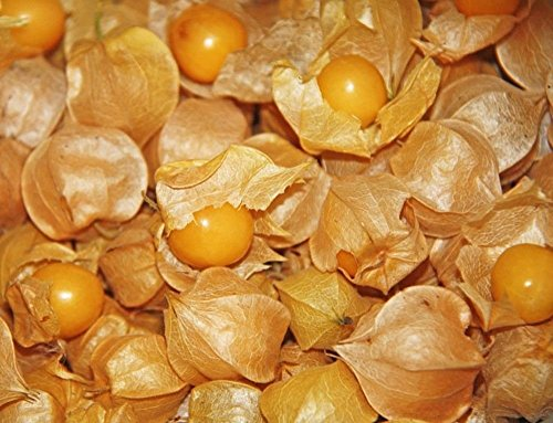 Physalis (Husk tomate) 25 Graines - Heirloom Jardin non-OGM Fruits légumes