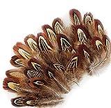 ERGEOB Natur Dekoration Hahnfeder fasan Feder 50 stück, 4-7cm läng, Ideal für Kostüme, Hüte, basteln, Zuhause Dekor, DIY braun