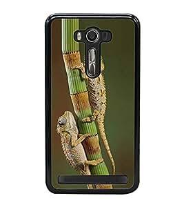 ifasho Designer Back Case Cover for Asus Zenfone Selfie ZD551KL (Reptiles Ankara Turkey Mandya)