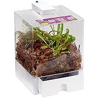 FloraAtHome - Sumpfpflanzen - Terrarium, groß, Mix fleischfressender Pflanzen  - Sarracenia-Hybride, Sarracenia psittacina, Dionaea muscipula - Schlauchpflanze, Kobralilie und Venusfliegenfalle