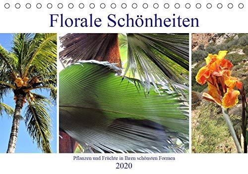Florale Schönheiten - Pflanzen und Früchte in ihren schönsten Formen (Tischkalender 2020 DIN A5 quer): Bezaubernde florale Motive fürs ganze Jahr (Monatskalender, 14 Seiten ) (CALVENDO Natur) - Schönheits-frucht