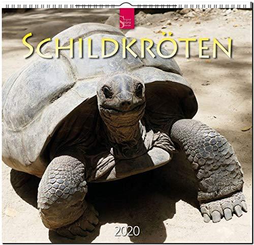 Schildkröten: Original Stürtz-Kalender 2020 - Mittelformat-Kalender 33 x 31 cm