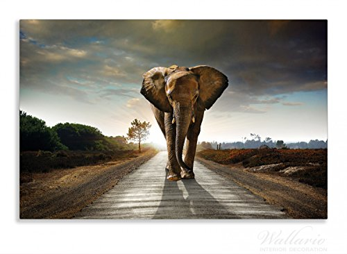 Wallario Herdabdeckplatte / Spritzschutz aus Glas, 1-teilig, 80x52cm, für Ceran- und Induktionsherde, Motiv Elefant bei Sonnenaufgang in Afrika