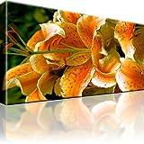 Bilder Lilie Blume Bild auf Leinwand 1-Teilig: 80x45 cm