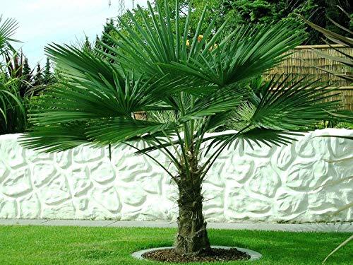 Bäume ¨¹berlebensraten Garten