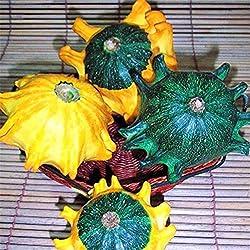 Portal Cool 30 Teile/satz Calamondin Miniatur Obstbaum Samen Zwerg Citrus Fortunella Japonica &