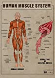 Human Muscle System Anatomy and function biology Poster Canvas Art print A4 A3 A2 A1