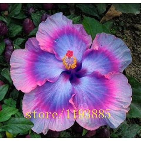 100pcs / bag Dinnerplate Hibiscus / Red Hot / perenne fiore del seme / facile da coltivare / enormi 10-12 pollici Fiori semi di bonsai fiori