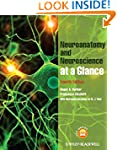 Neuroanatomy and Neuroscience at a Gl...