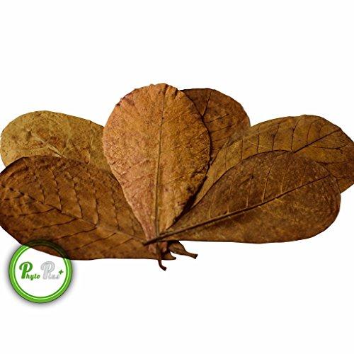 120 Pezzo 10-15cm Fish & Aquariums Foglie Mandorlo Indiano/catappa Leaves/trattamento Delle