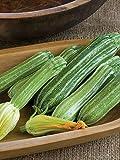 AGROBITS Zuccni Vegable Marrow ROMANESCOorganicUkraine 3 g Cocozelle