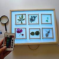 R-Crea - Mesa de luz Montessori RGB 64x48x7 Color Natural - Certificadas por la Universidad de Murcia