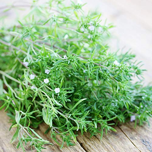 SANHOC Samen-Paket: Sommer Savory Samen - Satureja hortensis -seed